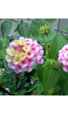 花びら三昧…